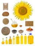 Verarbeitung einer Sonnenblume Stockfotografie