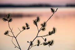 Verba en la puesta del sol Imagen de archivo