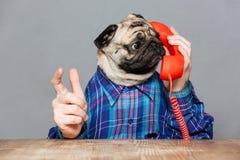 Verbaasde mens met pug hond het hoofd spreken op telefoon Stock Foto