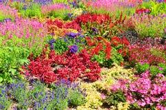 Verbazend bed van bloemen met vele verschillende bloemspecies De prachtige bloemen hebben heldere kleuren, hoofdzakelijk rood, ro royalty-vrije stock afbeeldingen