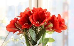 Verbazend boeket van rode hippeastrums op de vensterbank royalty-vrije stock foto