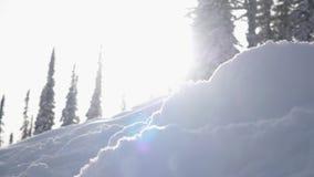 Verbazend de winterlandschap met hoge sparren en afwijkingen, sneeuw, de gevolgen van de lensgloed tijdens sneeuwval in bergen la stock videobeelden