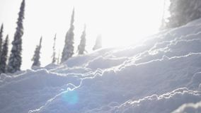 Verbazend de winterlandschap met hoge sparren en afwijkingen, sneeuw, de gevolgen van de lensgloed tijdens sneeuwval in bergen la stock video