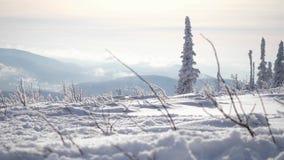 Verbazend de winterlandschap met hoge sparren en sneeuw in bergen Langzame Motie 3840x2160 stock footage