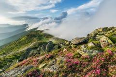 Verbazend landschap met bloemen Stock Afbeeldingen