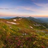 Verbazend landschap met bloemen Royalty-vrije Stock Foto's
