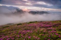 Verbazend landschap met bloemen Royalty-vrije Stock Afbeeldingen