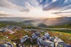 Verbazend landschap met bloemen Royalty-vrije Stock Afbeelding