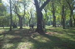 Verbazend landschap met boom en de hemel nr 2 royalty-vrije stock afbeelding