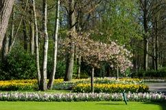 Verbazend landschap met kleurrijke bloembedden en bloempatronen Stock Foto
