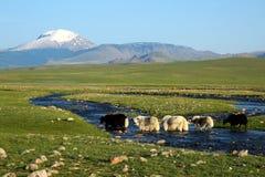 Verbazend landschap in Monglolia Stock Fotografie