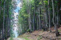 Verbazend landschap Targu Jiu Royalty-vrije Stock Afbeeldingen