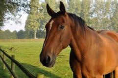 Verbazend Paard royalty-vrije stock foto
