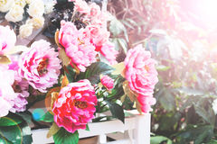 Verbazende aardmening van bloeiende roze bloemen in tuin Mooi landschap van kleurrijke roze bloemen met groene bladeren bij zonni Royalty-vrije Stock Afbeeldingen