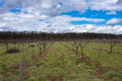 Verbazende blauwe hemel en groen landschap Royalty-vrije Stock Fotografie