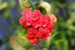 Verbazende bloem Royalty-vrije Stock Fotografie