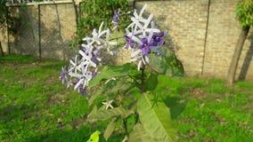 Verbazende bloem met lichte achtergrond stock fotografie