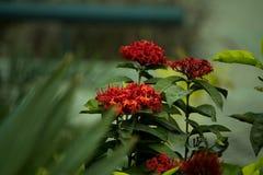 Verbazende bloem van een tuin onder zonlicht stock foto