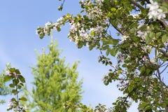 Verbazende boom met achtergrond van de hemel en de wolken Stock Foto's
