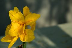 Verbazende close-up van heldere gele bloemblaadjebloem stock fotografie