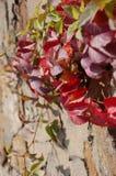 Verbazende de lente bloemenachtergrond, jasmijn witte bloemen Royalty-vrije Stock Afbeelding