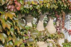 Verbazende de lente bloemenachtergrond, jasmijn witte bloemen Royalty-vrije Stock Afbeeldingen