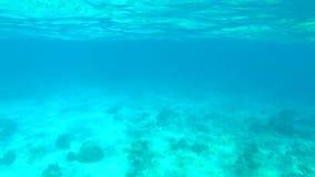 Verbazende Duidelijke Blauwe Zeewatermening Slowmotion het Duiken van HD GoPro Achtergrond stock video