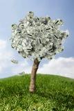 Verbazende geldboom op gras met dalende bladeren Royalty-vrije Stock Afbeeldingen