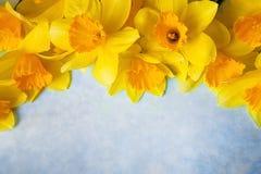 Verbazende grunge achtergrond met Gele bloemengele narcissen op turkooise textuur Mooie Kleurrijke Groetkaart voor Stock Fotografie