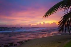 Verbazende heldere zonsondergang met tropische hemel stock afbeelding