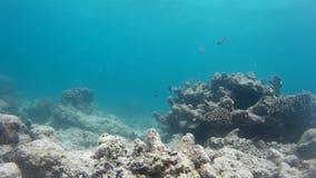 Verbazende Indonesische ertsader & exotische vissen stock videobeelden