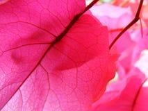 Verbazende kleuren Royalty-vrije Stock Fotografie