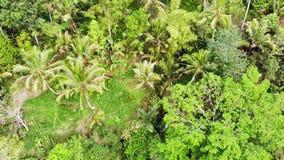 Verbazende luchtmening van hierboven over padievelden, bergstroom, landbouwgronden, van de cascade van watervallen in Bali langza stock footage