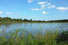 Verbazende mening aan tropische volledige Ashley-rivier Stock Afbeeldingen