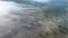 Verbazende mist over het bos stock video