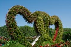 Verbazende mooie groene die harten van bloemen in de tuin worden gemaakt Royalty-vrije Stock Foto