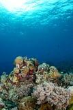 Verbazende onderwaterlandschappen Royalty-vrije Stock Fotografie