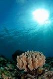 Verbazende onderwaterzeegezichten Royalty-vrije Stock Afbeelding