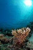 Verbazende onderwaterzeegezichten Stock Foto's