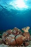 Verbazende onderwaterzeegezichten Stock Afbeeldingen