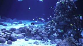 Verbazende onderzeese wereld stock video