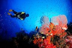 Verbazende overzeese ventilator in de prachtige onderwaterwereld stock afbeeldingen