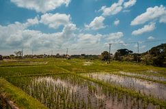 Verbazende padievelden in Bali royalty-vrije stock afbeelding