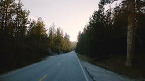 Verbazende POV-mening die van auto zich op mooie stille bosweg tussen lange pijnboombomen bewegen op zonsondergang in de langzame stock footage