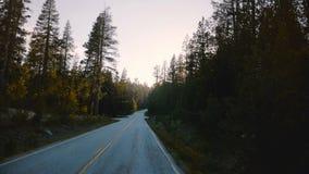 Verbazende POV-mening die van auto zich op mooie zonsondergang bosweg bewegen, zon die tussen pijnboombomen glanzen in de langzam stock footage