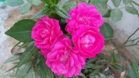 Verbazende rode bloem met gretachtergrond Royalty-vrije Stock Afbeeldingen