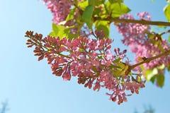 Verbazende roze bloemen in de lente stock foto's