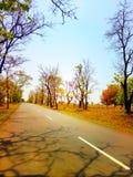 Verbazende scène van weg met bomen Stock Afbeeldingen