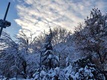 Verbazende sneeuw op bomen royalty-vrije stock afbeeldingen