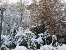 Verbazende sneeuw op bomen royalty-vrije stock foto's